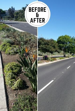 Median Trees: Before & After
